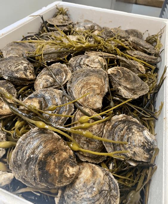native-oysters-dublin